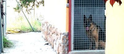 La mejor residencia canina ¿cómo encontrarla?