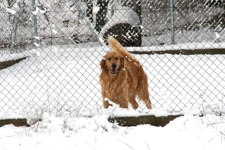 perro en residencia canina nariz de nieve