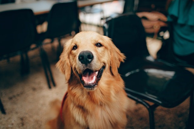 Los 10 mejores blogs de perros en español