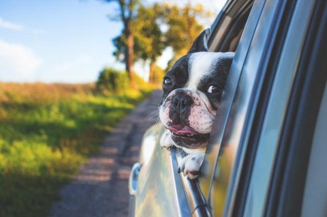 Cómo llevar a tu perro en el coche cuando vas de viaje