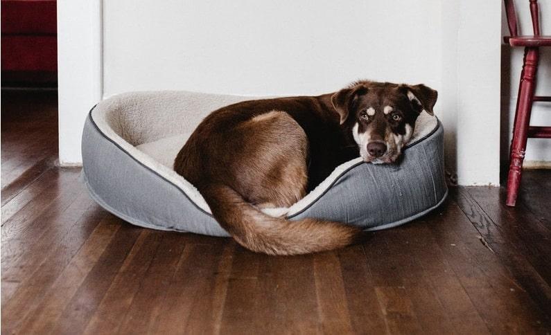 los perros esterilizados engordan