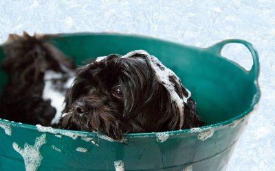 3 Dudas frecuentes sobre bañar a un cachorro
