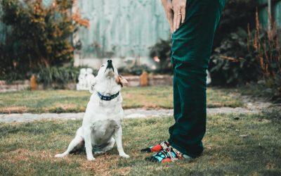 Cómo enseñar a un perro su nombre